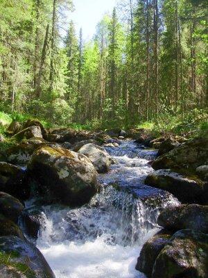 Carta da parati Il fiume di montagna nella foresta di conifere, Горная река в хвойном лесу