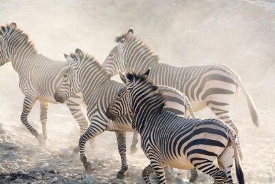 Carta da parati Zebre che, Namibia, in Africa