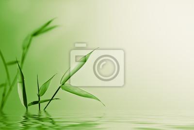 Zen E Bambù Giovane Su Verde Natura Sfondo Carta Da Parati Carte