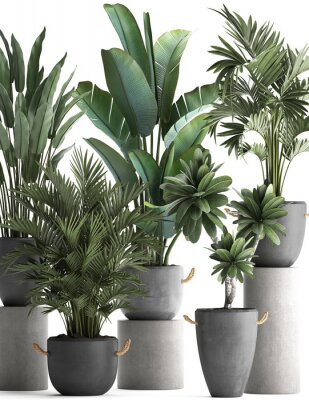 Poster 3d illustration of tropical plants on white background