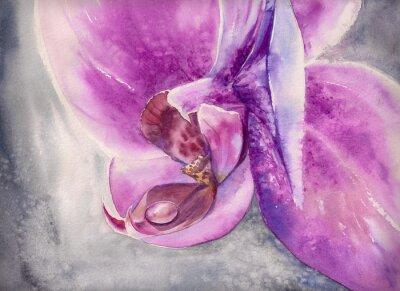 Poster Acquerello ansimare di fiori rosa orchidea con piccola goccia d'acqua.
