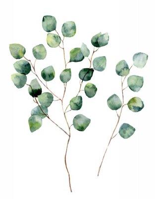 Poster Acquerello d'argento di eucalipto dollaro con foglie rotonde e rami. dipinto a mano gli elementi di eucalipto. illustrazione floreale isolato su sfondo bianco. Per la progettazione, tessile e lo sfond