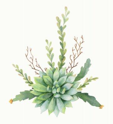 Poster Acquerello vettore bouquet di cactus e crassulacee isolato su sfondo bianco.
