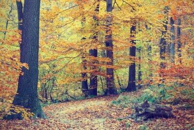 Poster Alberi di autunno colorati in foresta, look vintage