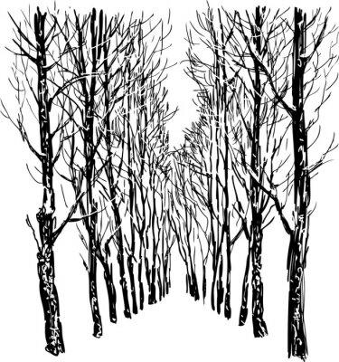 Poster Alberi nel parco d'inverno