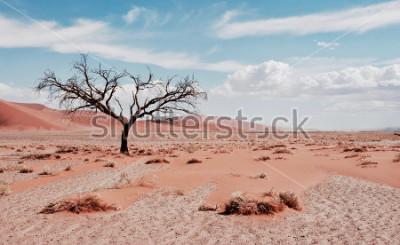 Poster Albero del deserto