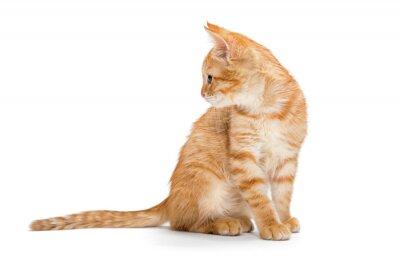 Poster Arancio, strisce, piccolo gattino