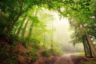 Poster Arco naturale di alberi