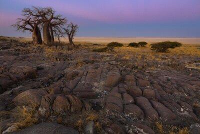 Poster Baobab, alla luce del primo mattino