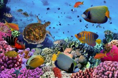 Poster barriera corallina colorata con molti pesci