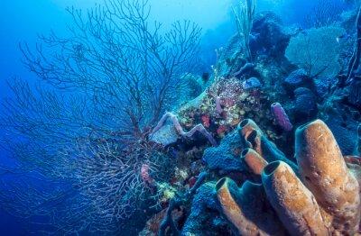 Poster barriera corallina subacquea