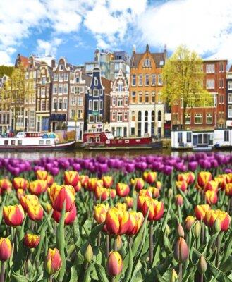 Poster Bel paesaggio con tulipani e case in Amsterdam, Olanda
