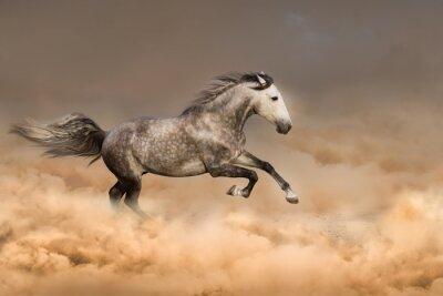 Poster Bella corsa di cavalli al galoppo in polvere