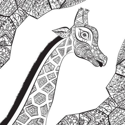 Poster Bella donna adulta di giraffa. Disegnato a mano Illustrazione della giraffa ornamentale. giraffa isolato su sfondo bianco. La testa di una giraffa ornamentali