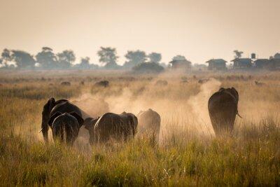 Poster Bella fauna selvatica al Parco Nazionale Chobe, Botswana