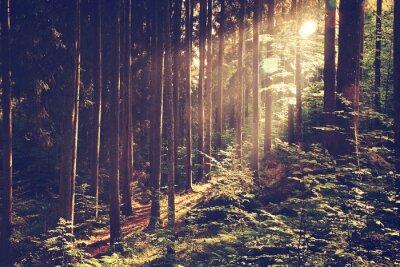 Poster Bella foresta sognante