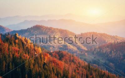 Poster Bella vista della foresta in una giornata di sole. Paesaggio autunnale Carpazi. Ucraina, Europa