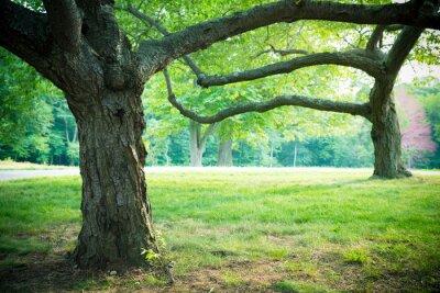 Poster Belle estate alberi ed erba in regolazione della sosta