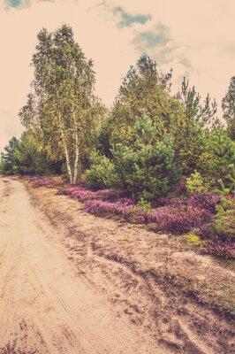 Poster Bellissimo paesaggio rurale con Heather fioritura