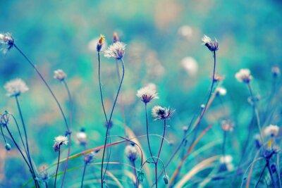 Poster Blu campo base di erbe epoca