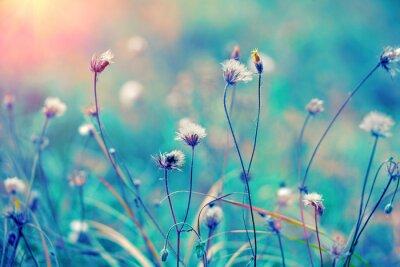 Poster Blu campo base di erbe vendemmia al sorgere del sole