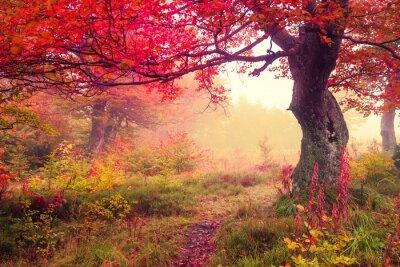 Poster bosco in autunno