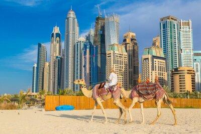 Poster Camel a Dubai Marina