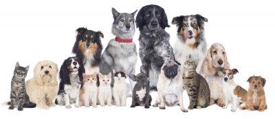 Poster Cani e gatti Gruppo