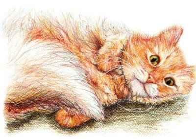 Poster Carino bella zenzero birichino gatto arte disegnata a mano