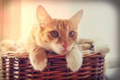 Poster cat cercando