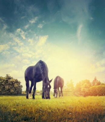 Poster Cavalli al pascolo in autunno prato su sfondo di alberi e cielo