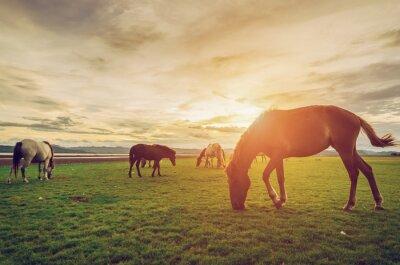 Poster Cavalli sul campo in erba con il tramonto epoca e stile retrò