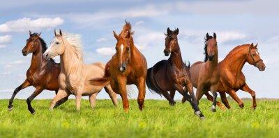 Poster Cavallo corsa mandria in bellissimo prato verde