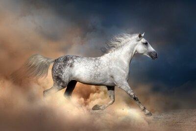 Poster cavallo Orlov eseguito in polvere