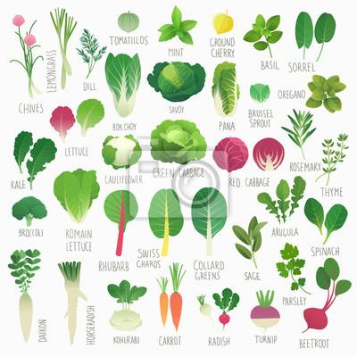 Poster Clip art raccolta alimentare Vol.1: verdure e le erbe