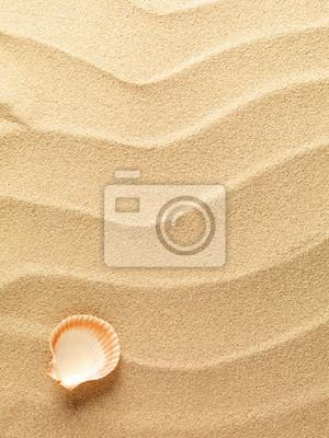 Conchiglie Con Sabbia Come Sfondo Manifesti Da Muro Poster Stella