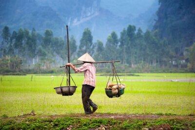 Poster contadino vietnamita in risaia riso in Ninh Binh, Tam Coc. L'agricoltura biologica in Asia