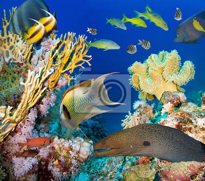 Poster Coralli e pesci