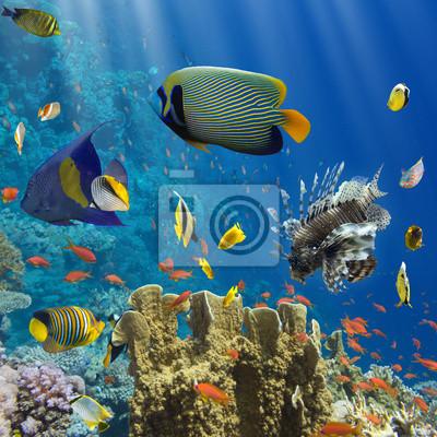 Poster Coralli e pesci in Sea.Egypt Red