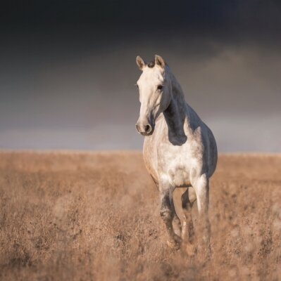 Poster corsa cavallo grigio