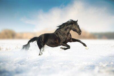 Poster corsa Cavallo nero nella neve