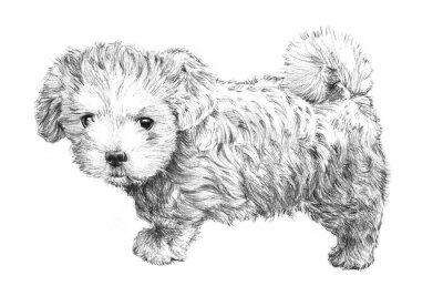 Poster cucciolo di cane immagine disegnata a mano in bianco e nero, adorabile abbozzo cucciolo di cane isolato su sfondo bianco per controllare, governare dell'animale domestico salone, la cura degli animali