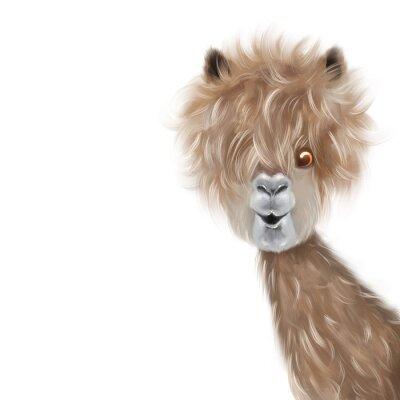 Poster Cute lama portrait hand painting illustration
