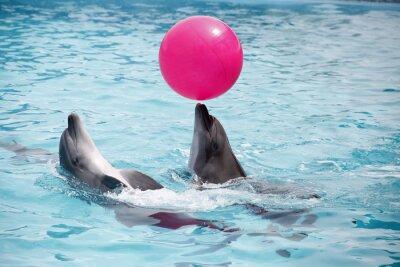 Poster delfini carino durante un discorso al delfinario