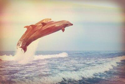 Poster delfini che saltano, instagram
