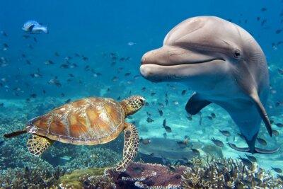 Poster delfino e tartaruga subacquea sulla barriera