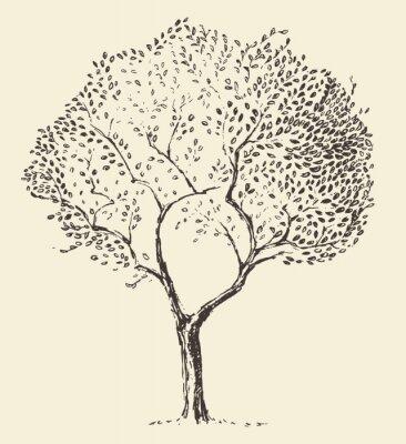 Poster disegnato Giovane ulivo illustrazione vettoriale mano