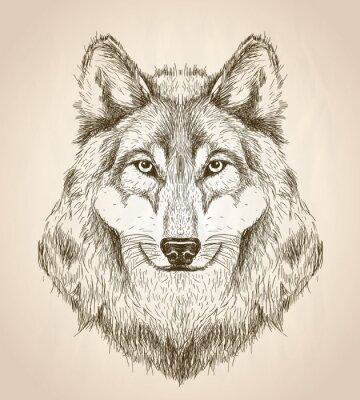 Poster Disegno vettoriale illustrazione di una vista frontale testa di lupo.