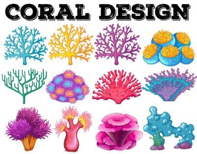 Poster Diversi tipi di disegno di corallo