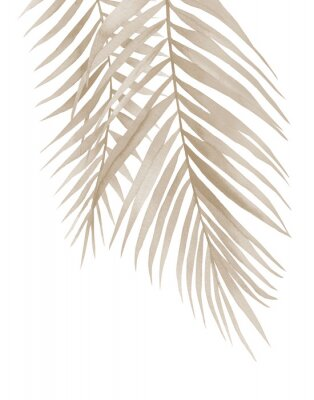 Poster Dried palm branches. Pastel beige leaves. .Watercolour illustration isolated on white background.